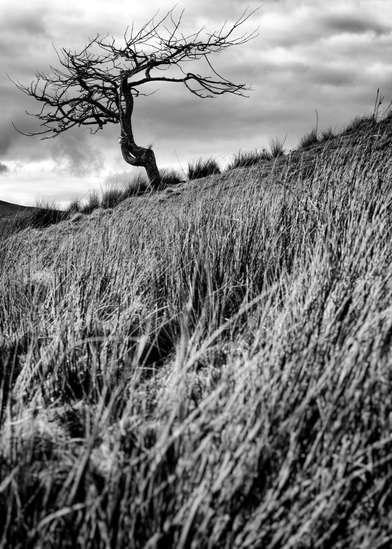 Solitary Tree.jpg