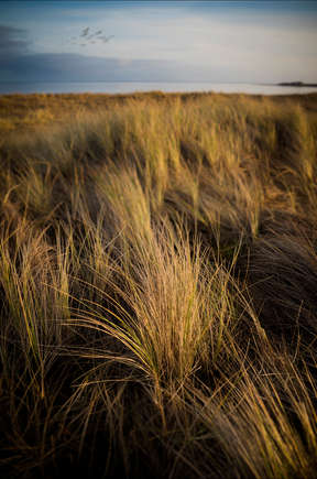 4th Barrier Sea Grass.jpg
