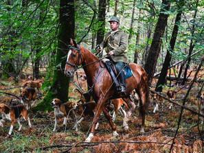 Dans les coulisses d'une chasse à courre dans une forêt du Morbihan