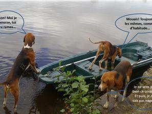 Les chiens à la manœuvre ...