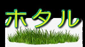 ホタル文字.png