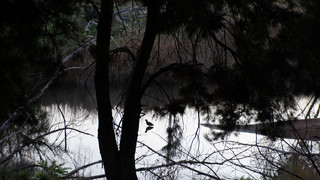 8 Fish River