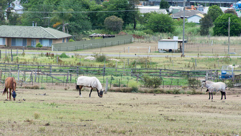 It was nice to see these horses again although they kept their distance today. Maybe it was too hot to walk up to the fence.