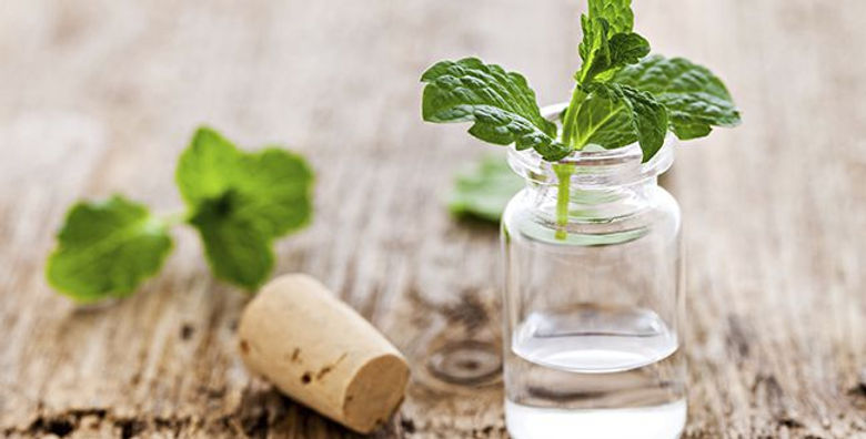 gettyimages-167217522-peppermint-oil-cgi