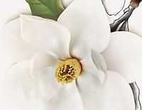Branding flower.PNG