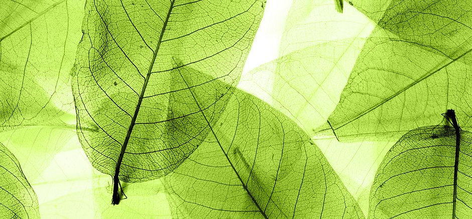 transparent-leaves-shutterstock-1940x900