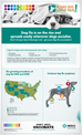 Canine Influenza: Why Vaccinate?
