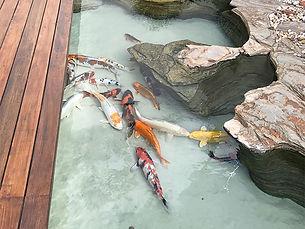 Lago ornamental com peixes