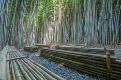 Bamboo Forest-033-059-2800x1869