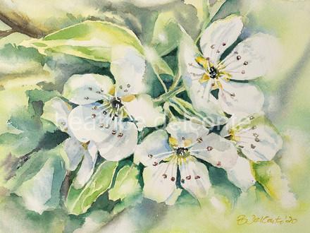 Birnbaumblüten, 2020