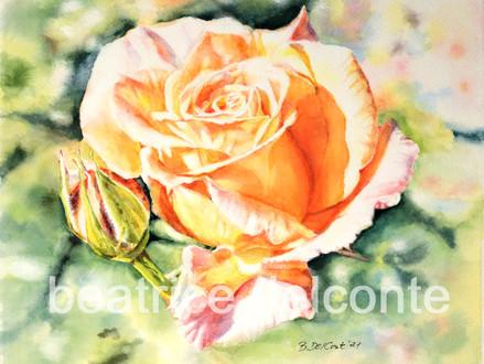 Rose im Licht, 2021