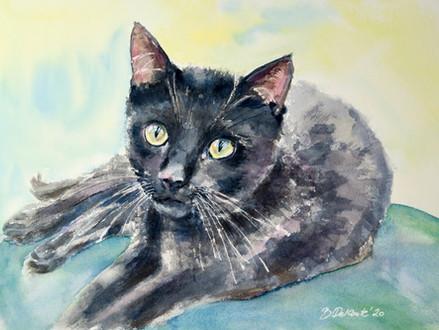 Schwarze Katze auf grünem Sofa, 2020