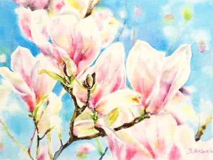 Magnolienblüten, 2021