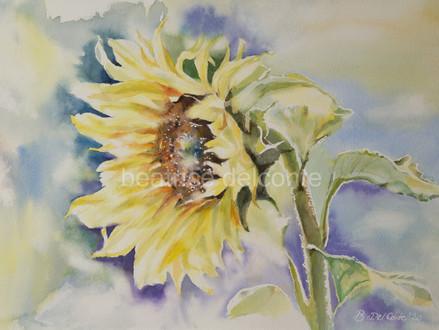 Sonnenblume im Licht, 2020