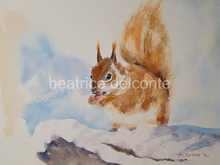 Eichhörnchen im Schnee, 2020