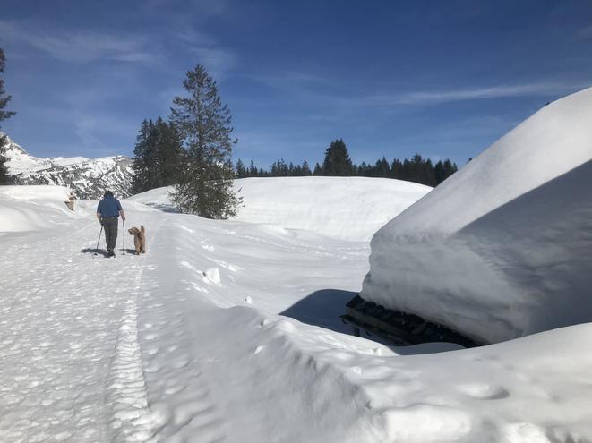 Wunderbare Winter-Rundwanderung ca. 3 Std.: Wildhaus - Sessellift Oberdorf - Ölberg - Gamperfin - Ölberg - Sessellift Oberdorf - Wildhaus