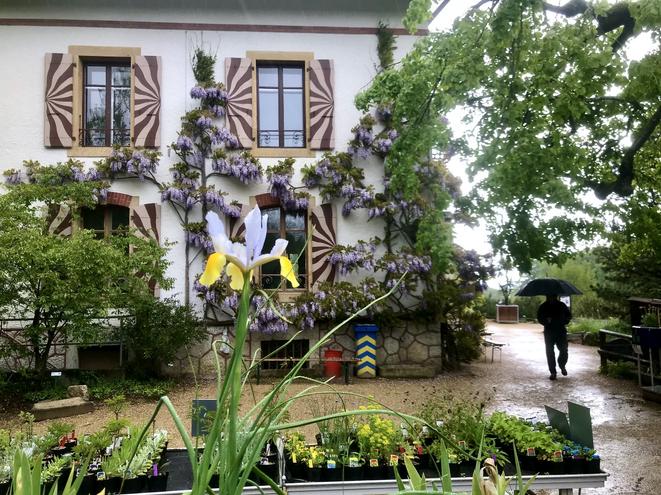 Am nächsten Morgen mit Linda und Moritz Rundgang im schönen botanischen Garten, mit Aufenthalt im Gewächshaus, während es kurzzeitig sträzte! Die geplante E-Bike Tour Chaumont Bike 743 viel buchstäblich ins Wasser!