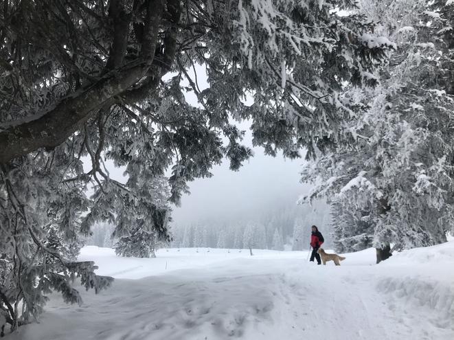 Trotz guter Wetterprognose leider den ganzen Samstag Wolken verhangen bis dichter Nebel. Trotzdem eine schöne Winterwanderung mit viel Schnee. Standseilbahn - Braunwald - Märchenhotel - Schwettiberg - Mattwald - Grotzenbüel - Hüttenberg - Nussbüel - Braunwald - Standseilbahn  Wanderzeit ca. 4 Std.