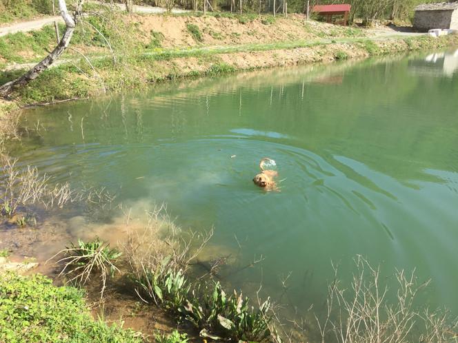 Pepo's 1. Schwimmerfahrung