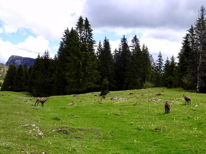 Gemsen aus nächster Nähe beobachtet. Weitere Tier-Beobachter: 1 Paar aus Diepoldsau, 1 Paar aus Gossau und wir aus Rehetobel.  Ein kurzer, netter Schwatz unter Ostschweizern bei erstmals angenehmen Temperaturen.