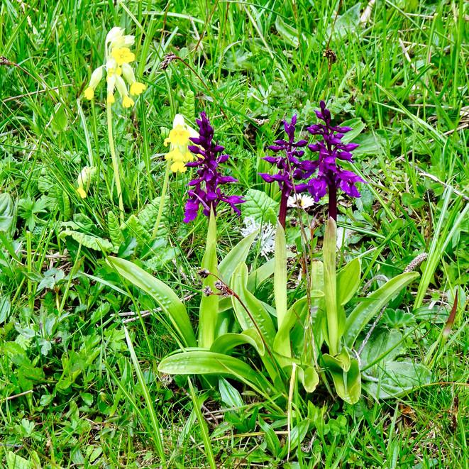 Orchideenpracht!