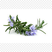 rosemary-essential-oil-herb-carrier-oil-