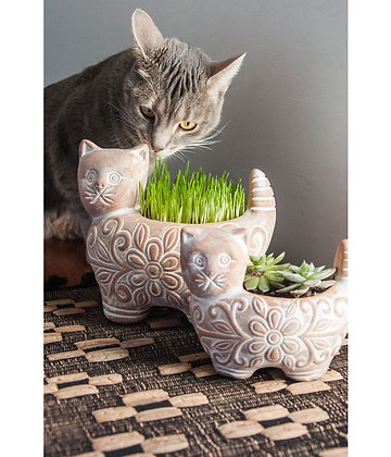Terracotta Cat Planters Small & Large