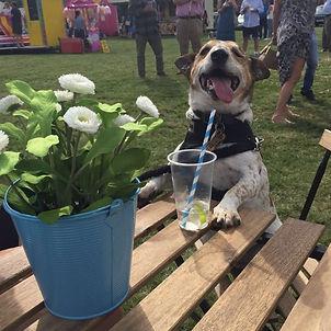 Gin Dogs.jpg
