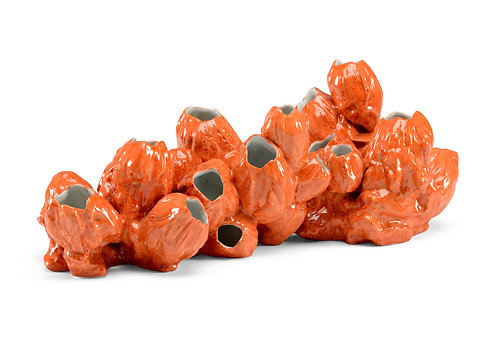 Barnacles - Orange