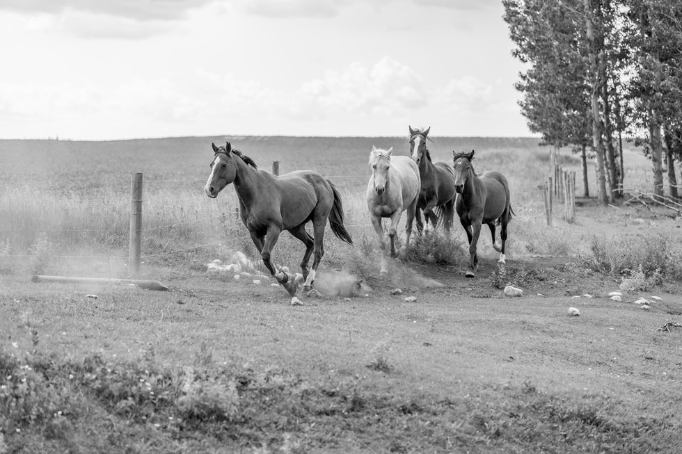 Calgary Photographer - Country Ranch Horses