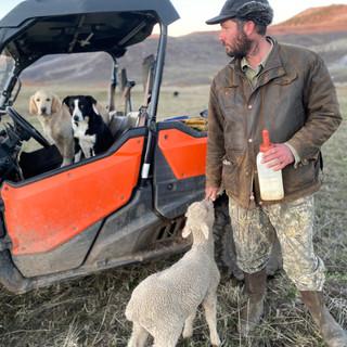 Tyler bottle lamb dogs.jpeg
