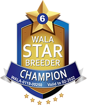 Wildflower Champion Logo 2021.png