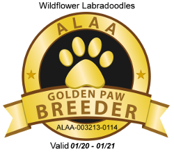 Wildflower ALAA Golden Paw 2020.png