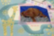 Australian Labradoodle