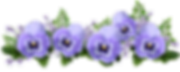 flowers-4241826_960_720[1].png