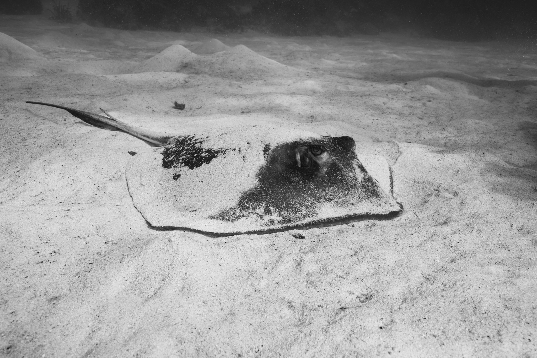 Ray in the Sand