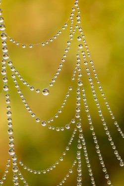 Nature's pearl necklace