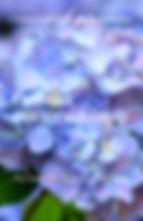The Art of Flower Photography Final.jpg