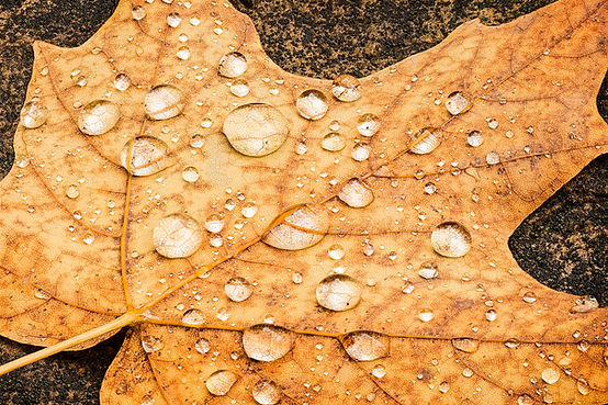 leafstack-Edit.jpg
