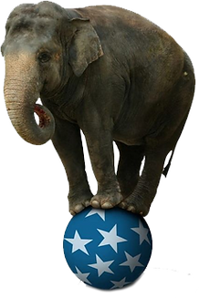 Employee Engagement Survey - Elephant in the Room