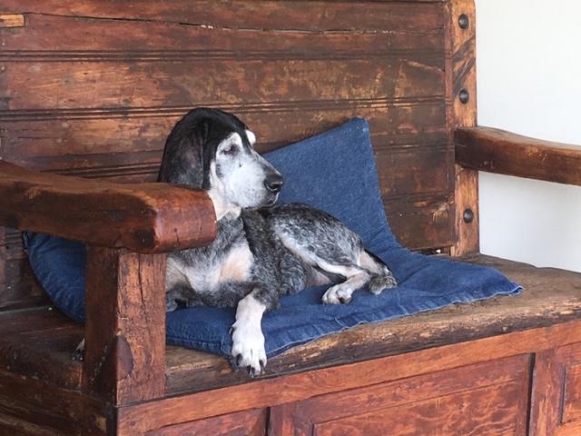 Nuestros perros /Our dogs