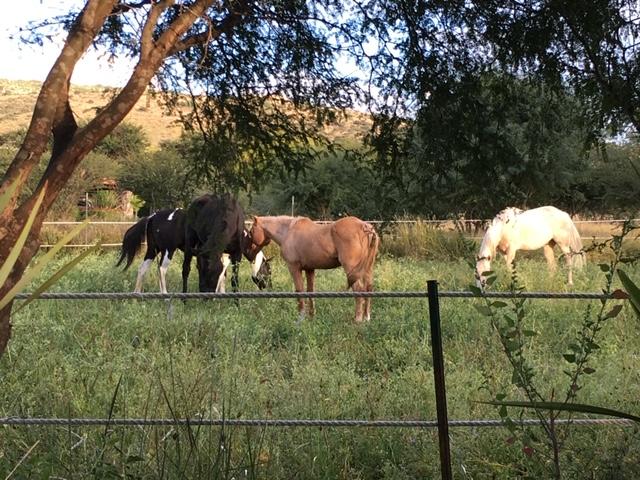 Nuestros caballos/ Our horses