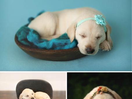 Ella Rey | Frisco Newborn PET Session