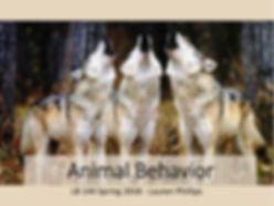 animal behavior title slide.JPG