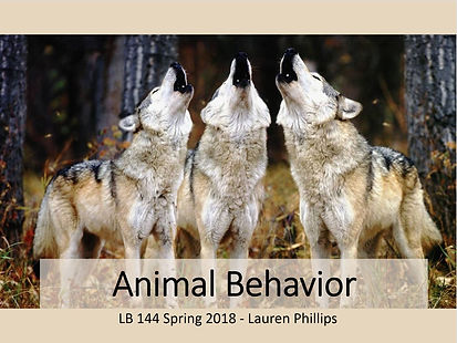 animal behavior title slide.JPG