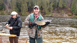 Holding walleye