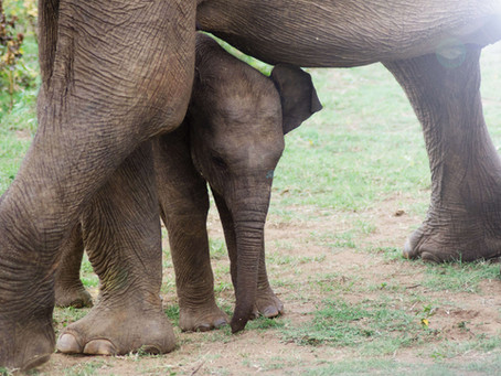Safaris in Sri Lanka : Animal Sightings