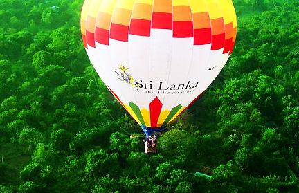 elephants-srilanka.jpg