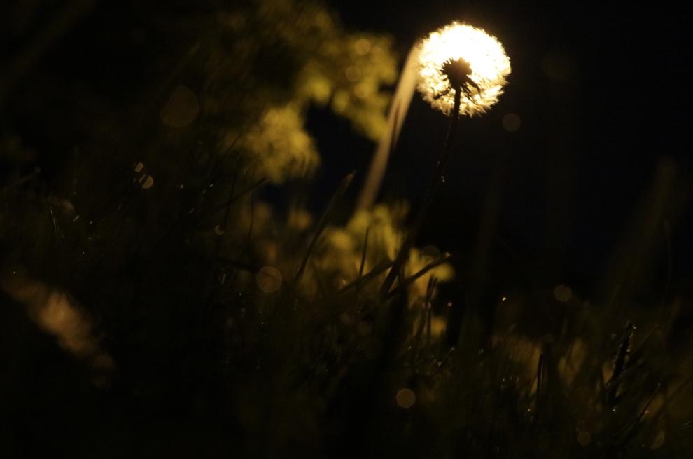 Light wish