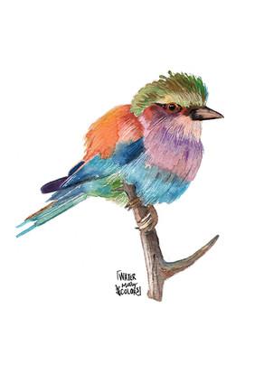 Pájaro con colores